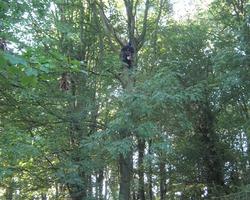 Le Jardin Dubois - Elagage, Abattage & Soin des arbres